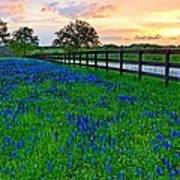 Bluebonnet Fields Forever Brenham Texas Art Print