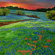 Bluebonnet Sunset Art Print