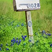 Bluebonnets And Mailbox Art Print