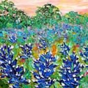 Bluebonnets Sunrise Art Print