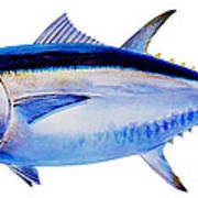 Bluefin Tuna Art Print by Carey Chen