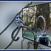 Bluejay Oob - Featured In 'out Of Frame' And Comfortable Art Groups Art Print
