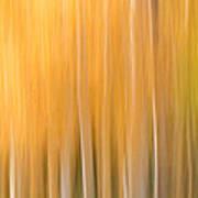 Blurred Aspens Art Print