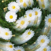 Blurred Daisies Art Print