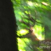 Blurry Buck Art Print