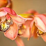 Blush Orchid Art Print