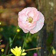 Blushing In Pink Art Print