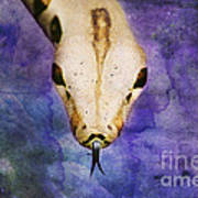 Boa Snake Art Print