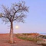 Boab Tree And Moonrise At Broome Western Australia Art Print by Colin and Linda McKie
