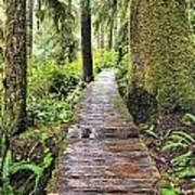 Boardwalk On The Rainforest Trail In Art Print