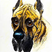 Boarhound Portrait Art Print