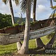 Boat In A Tree Puerto Rico Art Print