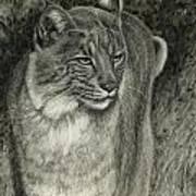 Bobcat Emerging Art Print