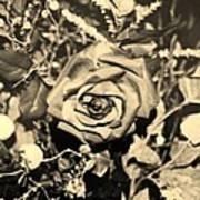 Boca Rose Art Print
