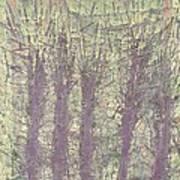 Bog Forms Through Fog  Art Print