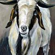 Bohr Goat With Blue Eyes Art Print