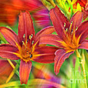 Bold And Beautiful Daylilies Art Print