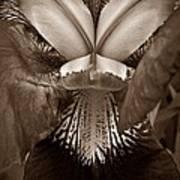 Bold Iris Sepia Art Print