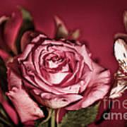 Bold Pink Rose Bouquet Art Print
