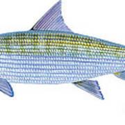 Bonefish Art Print
