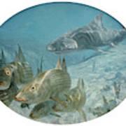 Bonefish Pursued By A Shark, 1972 Art Print