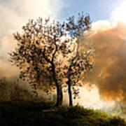 Bonfire And Olive Tree Art Print