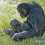 Bonobo Mother And Baby Art Print