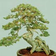 Bonsai Tree Art Print