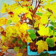 Bonsai Tree With Yellow Leaves Art Print