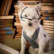 Bookworm Dog Art Print