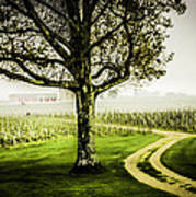 Bordeaux Vineyard Art Print