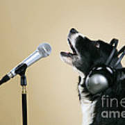 Border Collie Dog Singing Art Print