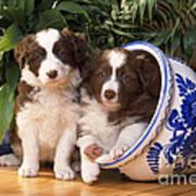 Border Collie Puppies In Plant Pot Art Print