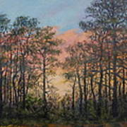 Border Pines Art Print