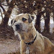 Border Terrier In The Woods Art Print