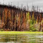 Boreal Forest At Yukon River Destroyed By Fire Art Print