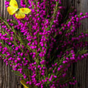Boronia With Yellow Butterfly Art Print