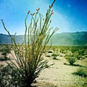 Borrego Desert Art Print