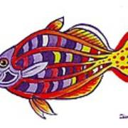 Boseman's Rainbowfish Art Print