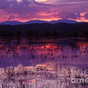 Bosque Sunset - Purple Art Print