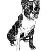 Boston Bull Terrier Art Print