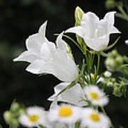 Botanical Beauty In White Art Print