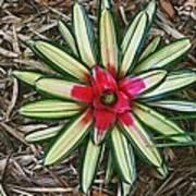 Botanical Flower Art Print