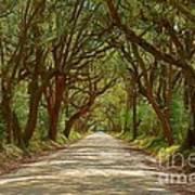 Botany Bay Road On Edisto Island Art Print