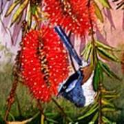 Bottle Brush And Wren Art Print