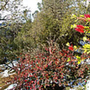 Bottlebrush In Sierra Nevada Foothills In Winter In Park Sierra-ca Art Print