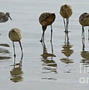 Shorebirds 1 Art Print