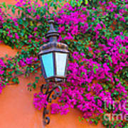 Bougainvillea And Lamp, Mexico Art Print