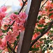 Bougainvillea On Trellis Art Print