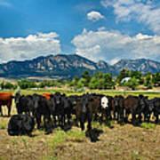 Boulder Beef Art Print